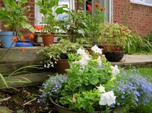 My Garden1